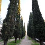 Cipreses